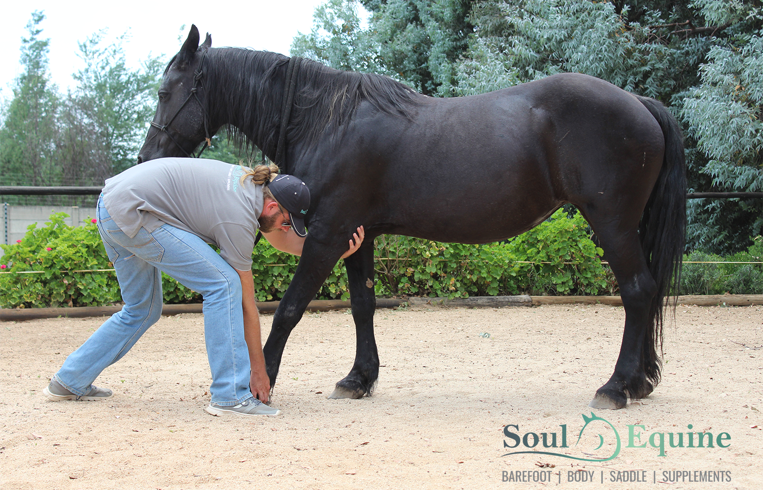 Welcome to Soul Equine